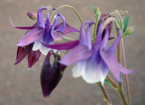 DSC01503紫の花1.jpg